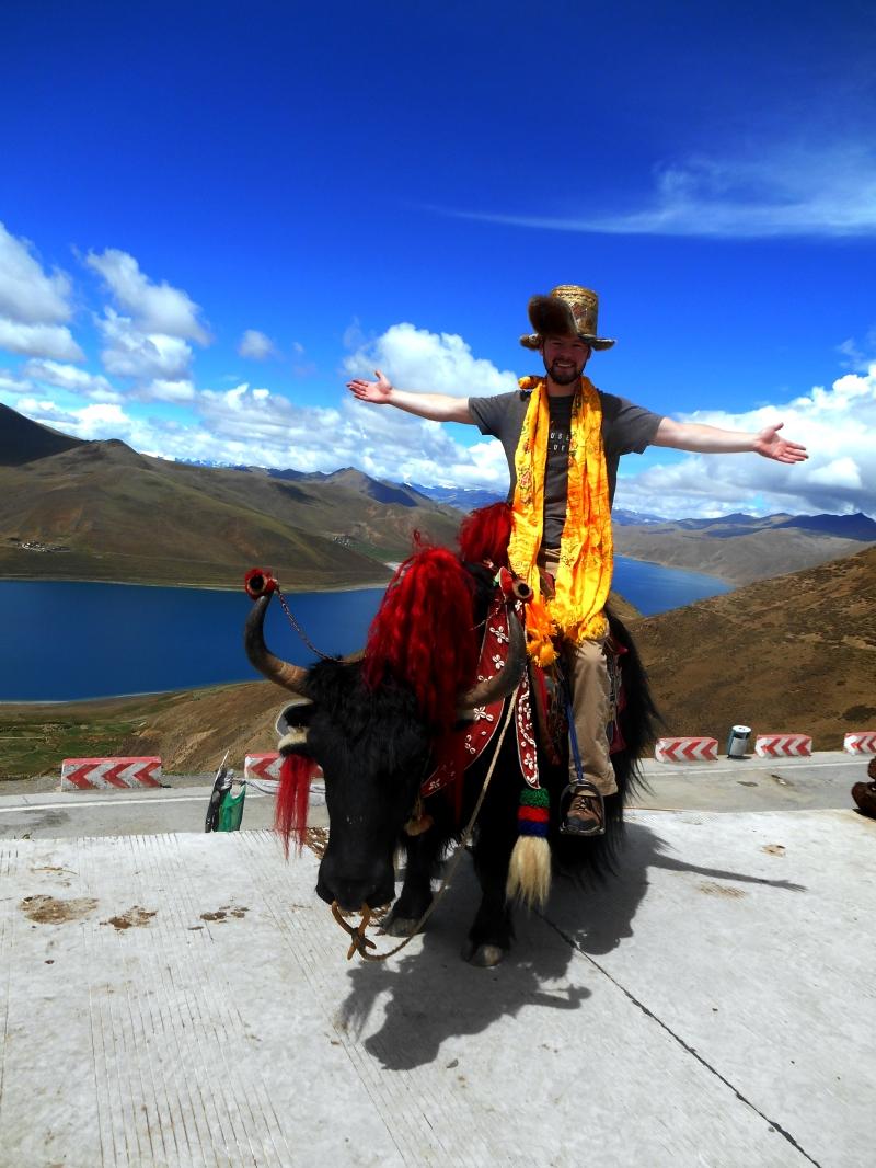 tibetyak.jpg