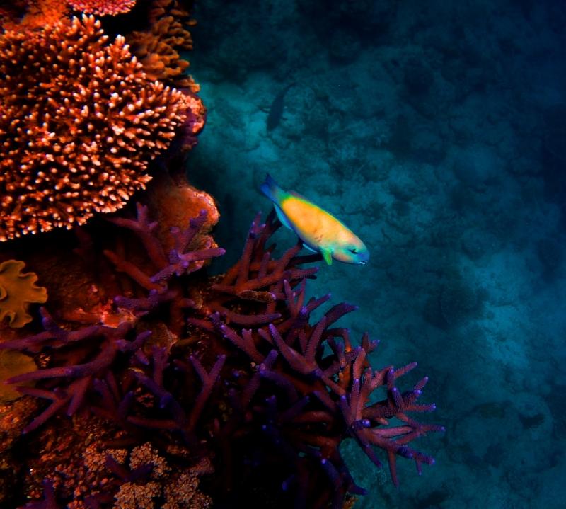 australiareeffish2