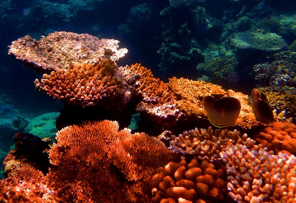 australiareeffish4