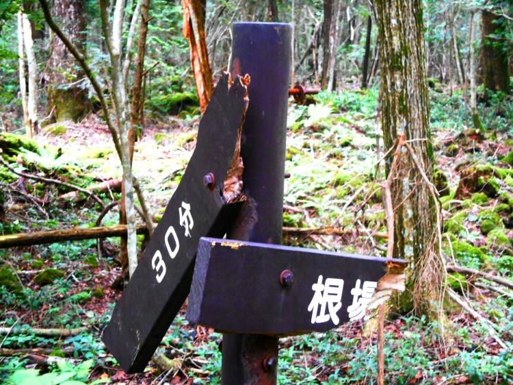 japanaoki