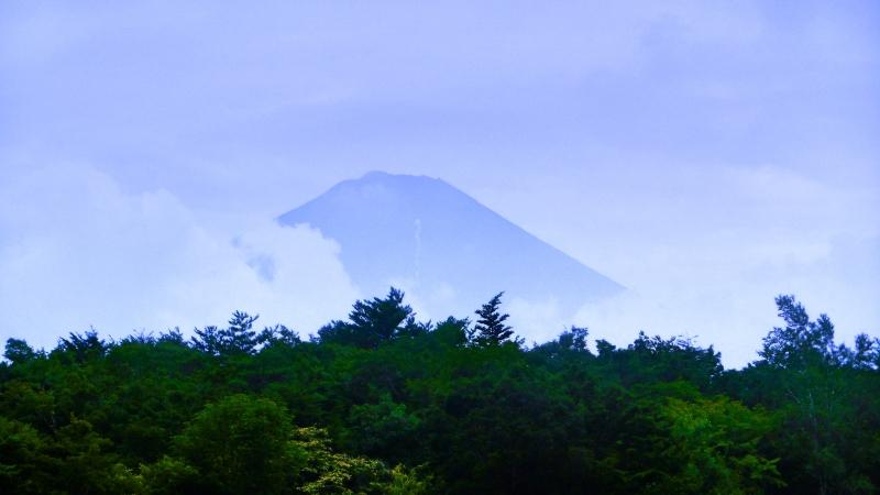 japanforest5.jpg