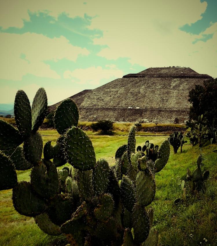 mexixocactus3