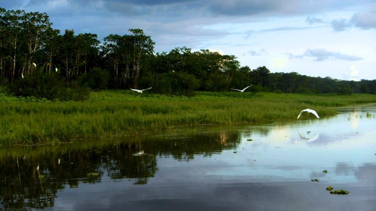 amazonwetlands