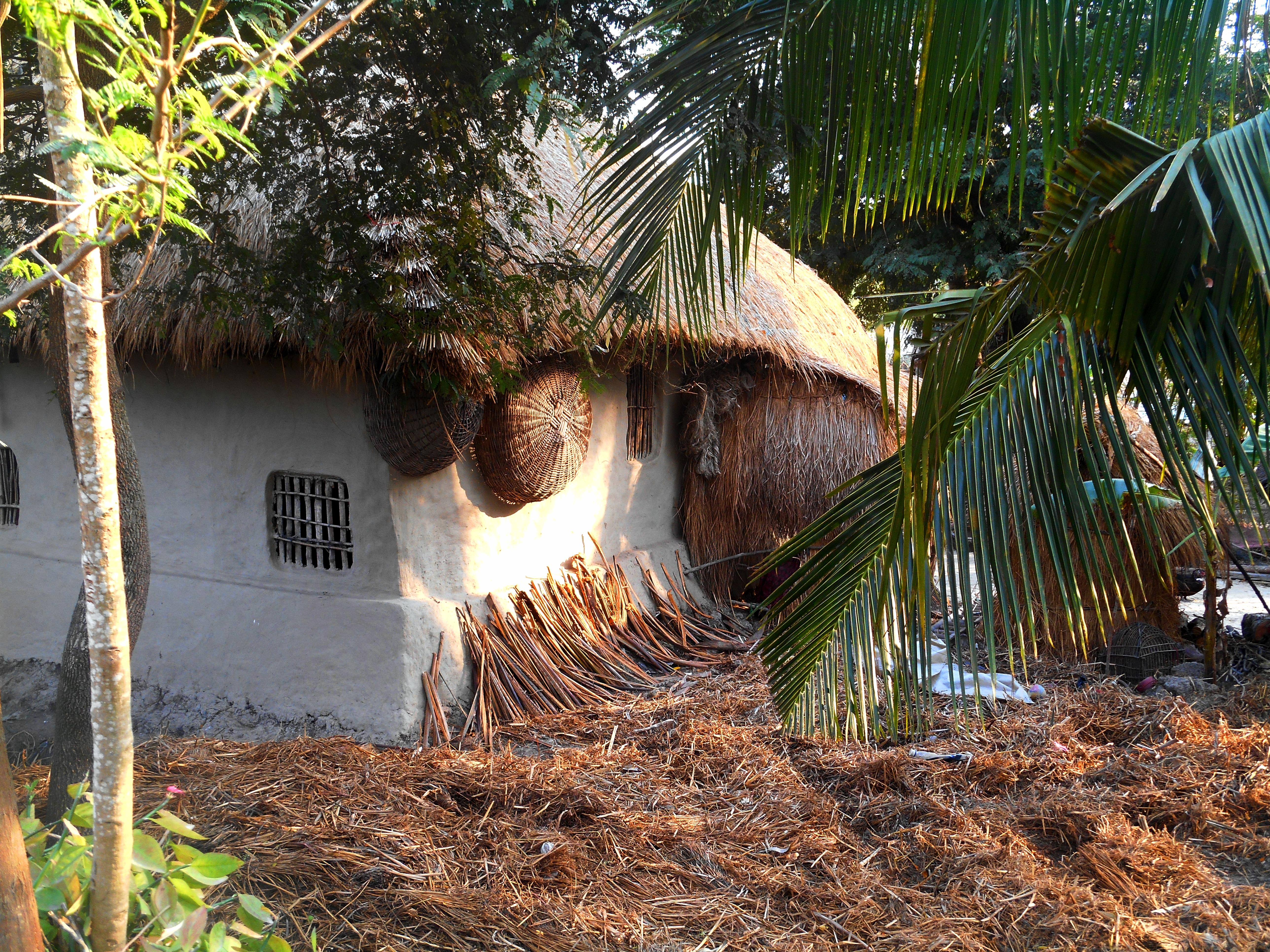 indiajunglehouse