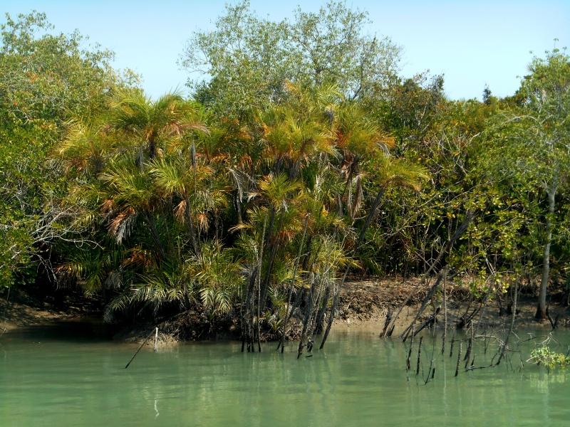 indiatrees