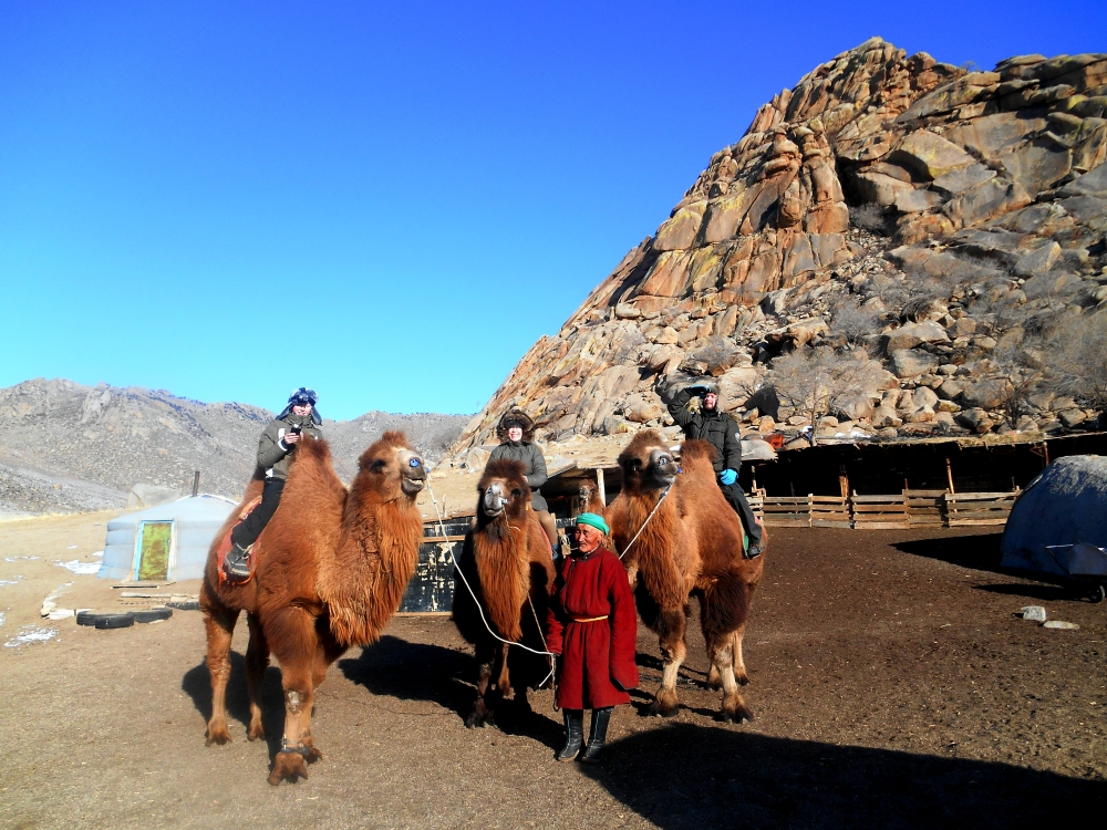 mongoliacamels